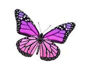 Mor kelebek, üzerinde beyaz izole — Stok fotoğraf