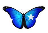 Somalia flag butterfly flying, isolated on white background — Stock Photo