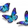 Stock Photo: Three turquoise blue butterflies, isolated on white background