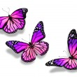Stock Photo: Three violet blue butterflies, isolated on white background