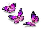 Drei violett blau schmetterlinge, isoliert auf weißem hintergrund — Stockfoto