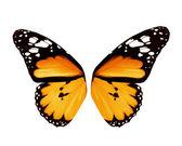 Alas de mariposa naranja, aislado sobre fondo blanco — Stockfoto