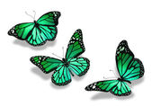 Three turquoise green butterflies, isolated on white background — Stock Photo