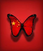 Chinese flag butterfly, isolated on flag background — Stock Photo