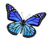 Farfalla blu turchese, isolato su bianco — Foto Stock