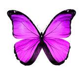 бабочка морфо фиолетовый, изолированные на белом — Стоковое фото