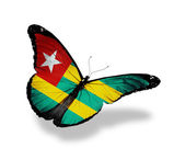 Togo flag butterfly flying, isolated on white background — Stock Photo