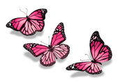 Three pink butterflies, isolated on white background — Stock Photo