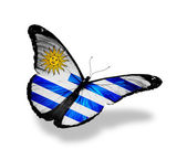 Uruguay flag butterfly flying, isolated on white background — Stock Photo