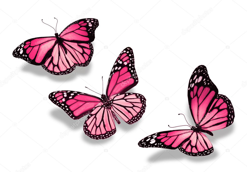 Sistema De Mariposas Rosadas Hermosas Ilustración del Vector ...