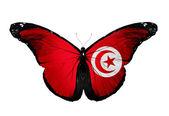 Borboleta de bandeira de tunísia, isolada no fundo branco — Foto Stock