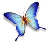 голубая бабочка, изолированные на белом — Стоковое фото