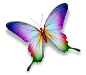 Colorful butterfly , isolated on white — Stok fotoğraf