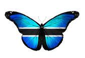 Botswana flag butterfly, isolated on white background — Stock Photo