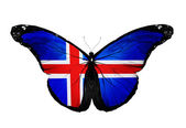 Iceland flag butterfly, isolated on white background — Stock Photo