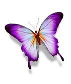 Violet butterfly , isolated on white — Stock Photo