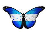 ホンジュラスの旗蝶、白い背景で隔離 — ストック写真