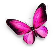 Pink butterfly , isolated on white — Stock Photo