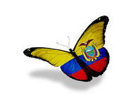 Ecuador flag butterfly flying, isolated on white background — Stock Photo