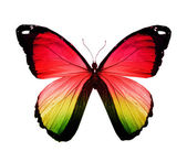 Morpho farfalla colorata, isolato su bianco — Foto Stock