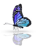 Blue butterfly , isolated on white mirror background — Stock Photo