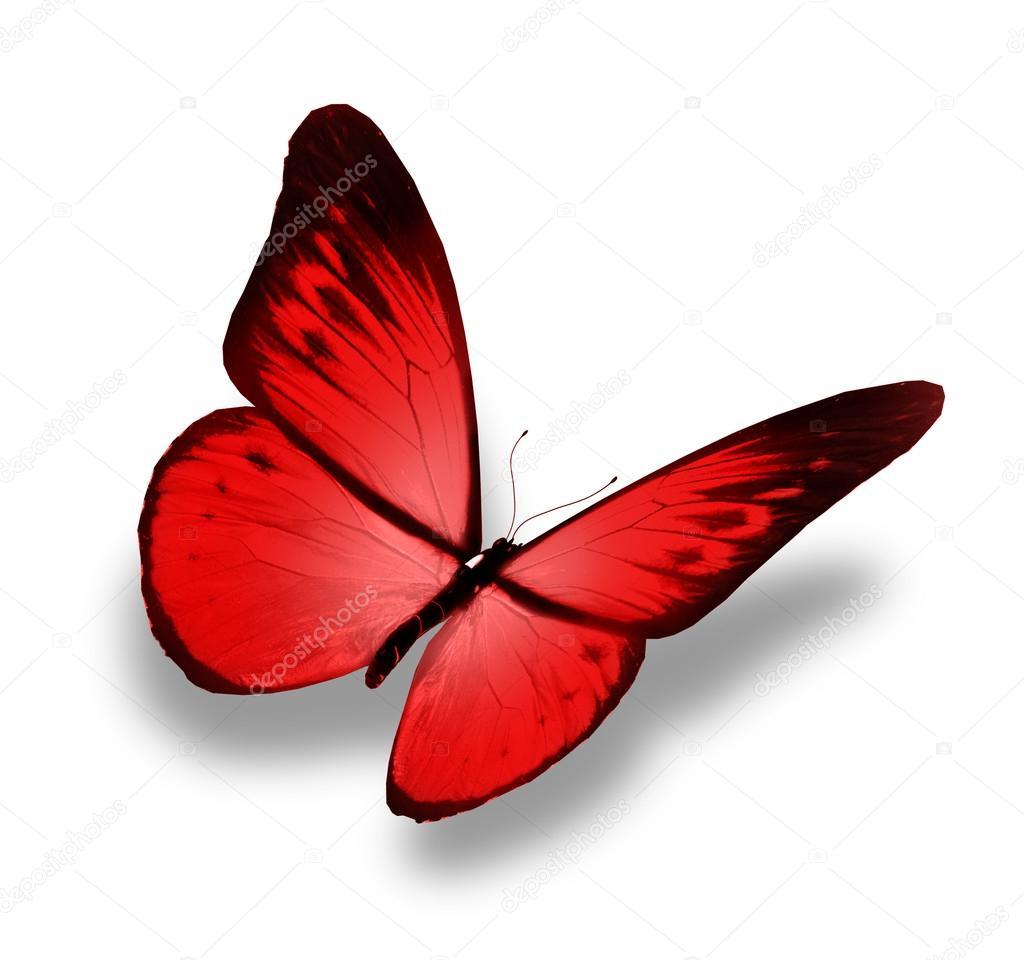rouge papillon vole isol sur fond blanc photo 18497907. Black Bedroom Furniture Sets. Home Design Ideas