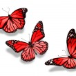 Three red butterflies, isolated on white background — Stock Photo #18905953