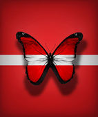 Latvia flag butterfly, isolated on flag background — Stock Photo