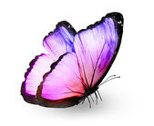 Color butterfly , isolated on white — Stockfoto