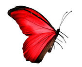 Red butterfly , isolated on white — Stock Photo