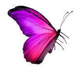Violetter schmetterling, isoliert auf weiss — Stockfoto