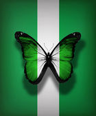 Nigeria flag butterfly, isolated on flag background — Stock Photo