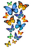 Many different butterflies, isolated on white background — Stock Photo
