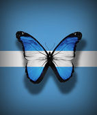 Argentinean flag butterfly, isolated on flag background — Stock Photo