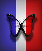 French flag butterfly, isolated on flag background — Stock Photo
