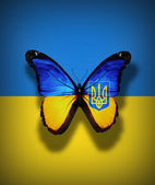 Ukrainian flag butterfly with coat of arms, isolated on flag background — Stock Photo