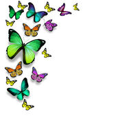 Color butterflies, isolated on white background — Stock Photo