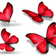 Four red butterfly, isolated on white background — Stock Photo