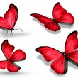 Four red butterfly, isolated on white background — Stock Photo #20907935