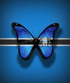 Botswana flag butterfly with coat of arms, isolated on flag background — Stock Photo