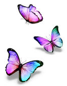 Three color butterflies, isolated on white — Stock Photo