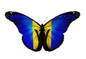 Barbados flag butterfly flying, isolated on white background — Stock Photo