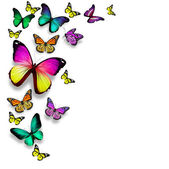 цвет бабочки, изолированные на белом фоне — Стоковое фото