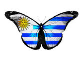 Uruguay flag butterfly, isolated on white background — Stock Photo