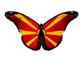 Macedonia flag butterfly, isolated on white background — Stock Photo