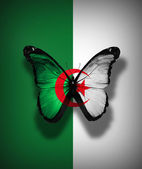 Algerian flag butterfly, isolated on flag background — Stock Photo