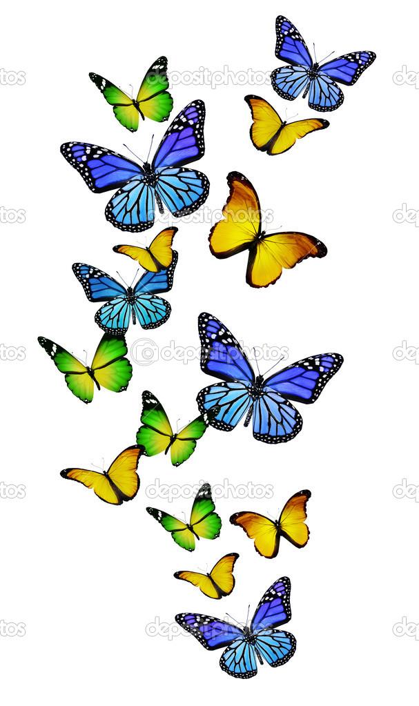 Колибри средней полосы России бабочки  бражники  ЭкоЕлец