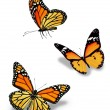 Three orange butterflies, isolated on white — Stock Photo #22438563