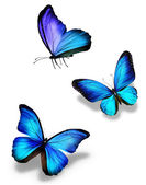 Three blue butterflies, isolated on white — Stockfoto