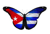Cuban flag butterfly flying, isolated on white background — Stock Photo